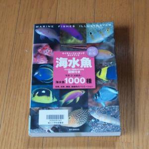 海水魚 ひと目で特徴がわかる図解付き (ネイチャーウォッチングガイドブック)