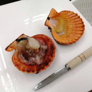 ヒオウギ貝から出てきた生物はクモヒトデ