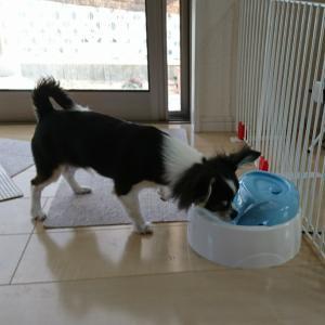 新しい犬用給水器