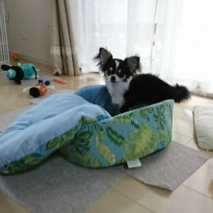 シャンプーと新しい夏用ベッド