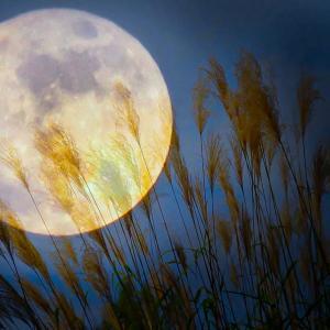 明日、21日は中秋の名月