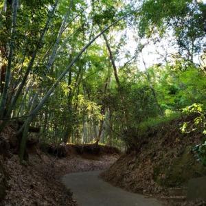 滝山城跡の竹林にて