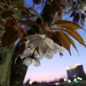 昭島にて夕暮れ時4.05