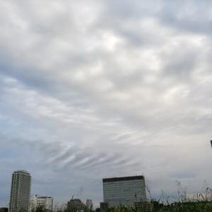多摩川土手にて10.16