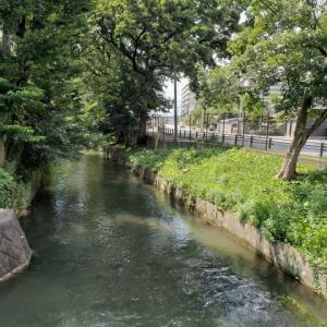 玉川上水と武蔵関公園8.24