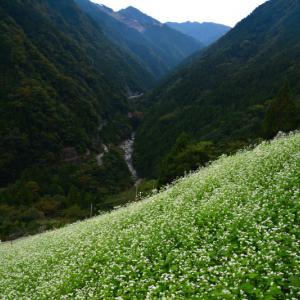 「天空の蕎麦畑」 (徳島県つるぎ町)