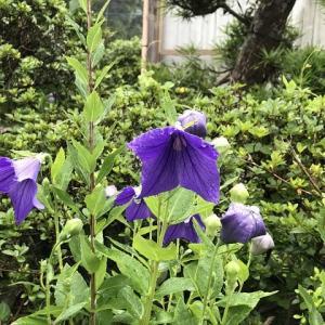 雨上がりの庭で
