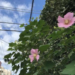 8月1日・梅雨明け宣言とアイビーハウス