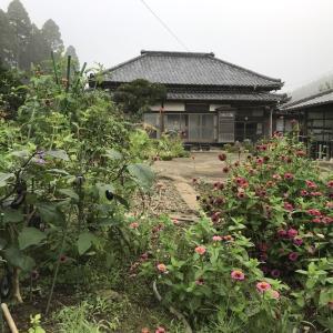 台風後の野菜・ピーマンの花など