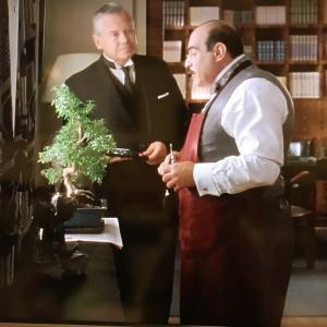 ポアロさんが盆栽の手入れを&ワクチン接種その後