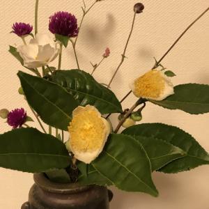稽古の花はお茶の花で