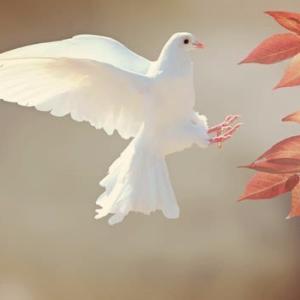 「日本国憲法の平和主義を体現」「日本国憲法の平和の理念の堅持」──広島と長崎の「平和宣言」