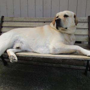 お気に入りのベンチ