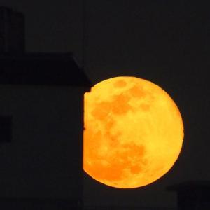 20/04/08  昨日よりもまん丸なお月様。 月齢15日目は月の出直後から…。そしてスーパー&ミニマムムーンの大きさの比較も。