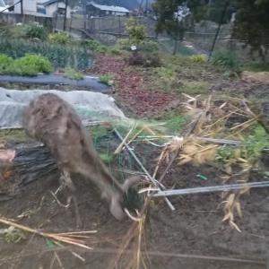 広島 有害駆除 猟期終了後の初仕事