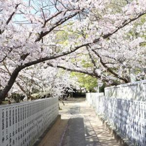 桜のうつろい