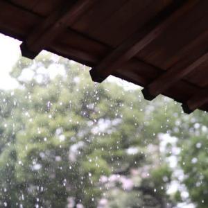 梅雨の雨 アジサイ