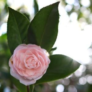 1月15日の言葉「さしのぼる 朝日のごとく さわやかに もたまほしきは 心なりけり」