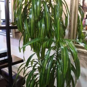 髪の力で植物がメキメキ元気になる⁉️