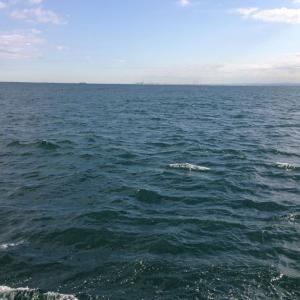 【釣行】福浦岸壁1222 遠投カゴ 平日釣行(その2)