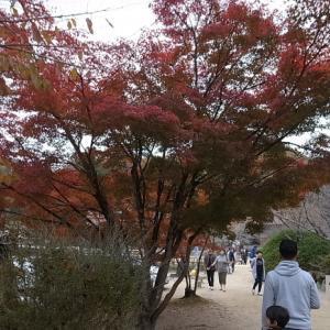 特別史跡旧閑谷学校の紅葉~熊山遺跡
