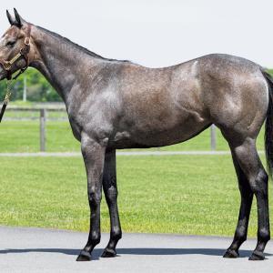 シルクホースクラブ2021年度1歳募集馬「37.カルディーンの20、38.ヴィアフィレンツェの20」