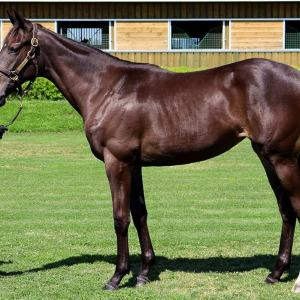DMMバヌーシー2021年度1歳募集馬「レッドオーヴァル2020、クルソラ2020」
