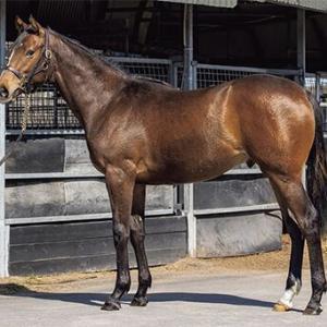 サラブレッドクラブライオン2021年度1歳募集馬「15.ポケットチャーリーの2020、ラビルキンの2020」