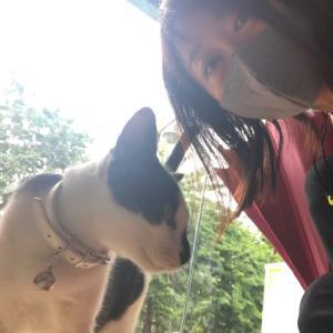 可愛いにゃんこず@PETA PET SHOP(チョンノンシー駅)