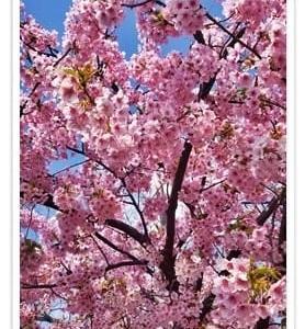3月10日・・・春^^