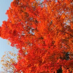 池上 永寿院の紅葉(2019.12.8)