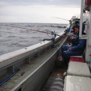釧路沖、タラ大漁