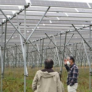 市民エネルギー千葉のソーラーシェアリングを見学