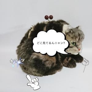 がま口になったネコ!1年前の作品( *´艸`)