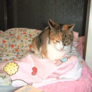 布団の上で吐いた猫