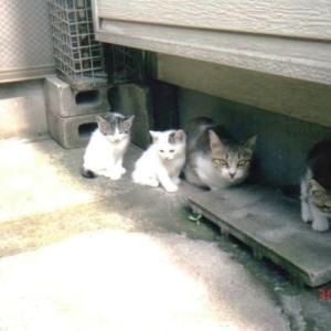 思い出の猫たち№11