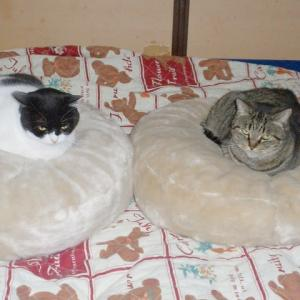 家の中で飼う時の猫たち