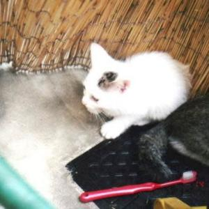 思い出の猫たち№18