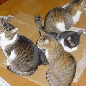 思い出の猫たち№22