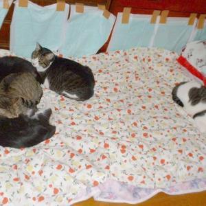 思い出の猫たち№24
