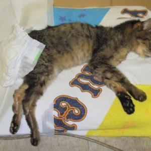 24歳を過ぎた猫