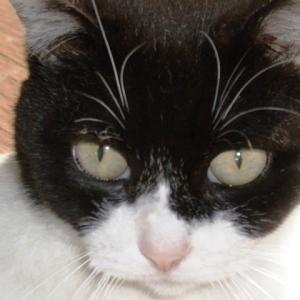 体重が落ちてきた猫