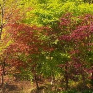 新緑の季節が始まりました♪【貸別荘スターヒルズ】