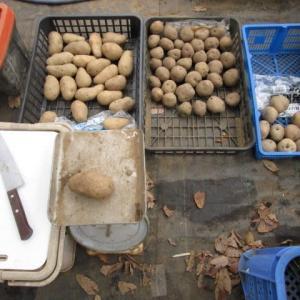 2月25日・ジャガイモの切り分けをしました!
