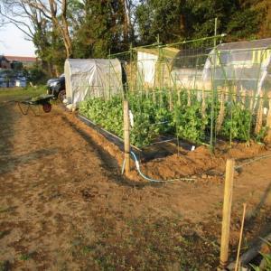 4月4日・豆類の除草と資材整理!