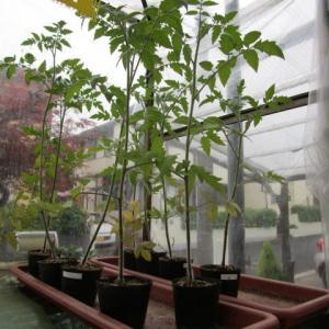 5月26日・余っていた苗を植え付け!