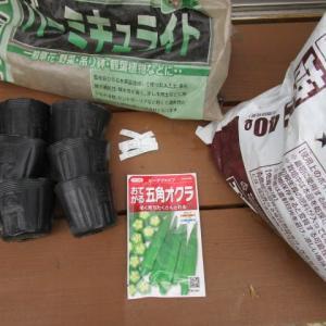 6月13日・オクラ播種!