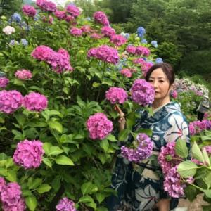 梅雨の晴れ間の花追い、『紫陽花の谷』