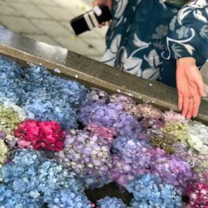 続・花追い、『紫陽花の丘』