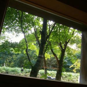 平日休み、森中カフェへ♪